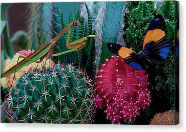 Canibal Canvas Print - Praying Mantis  Hunting For Prey by Leslie Crotty