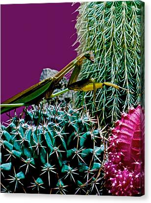Canibal Canvas Print - Praying Mantis  Looking For Prey Walking Very Carefully by Leslie Crotty