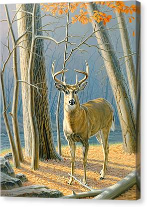 Pre-flight- Whitetail Buck Canvas Print by Paul Krapf