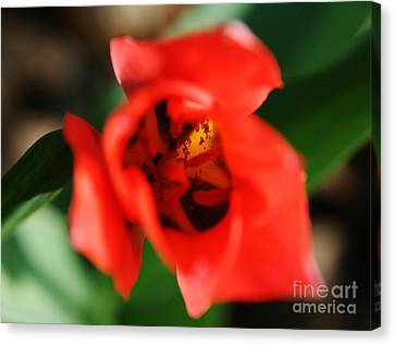 Pre-pollination  Canvas Print by Neal Eslinger