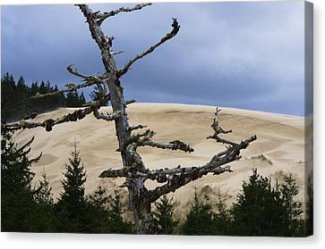 Canvas Print featuring the photograph Pre Storm by Adria Trail