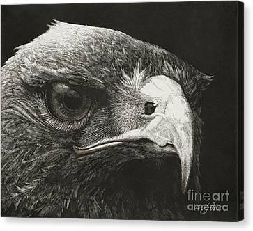 Predator Canvas Print by David Griffin