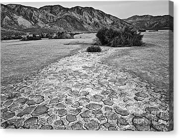 Prehistoric - Clark Dry Lake Located In Anza Borrego Desert State Park In California. Canvas Print by Jamie Pham