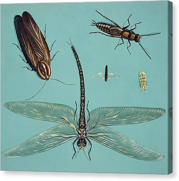 Prehistoric Insects Canvas Print