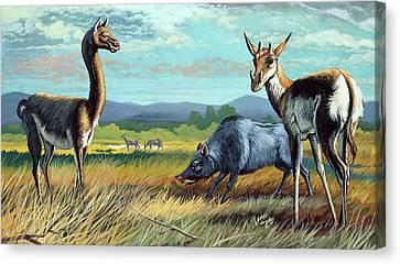 Prehistoric Mammals Canvas Print by Deagostini/uig