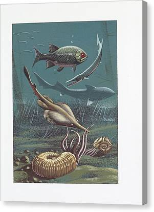 Prehistoric Marine Life Canvas Print