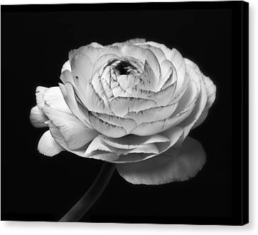Black And White Roses Flowers Art Work Photography Canvas Print