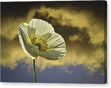 Prelude To Spring Canvas Print by Lynn Bauer