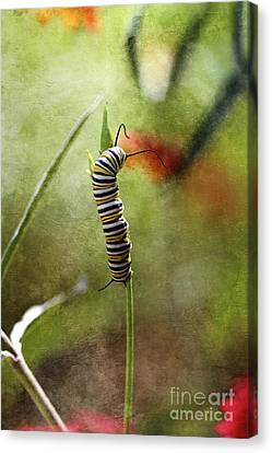 Preparing For Change II Canvas Print by Pamela Gail Torres