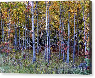 Preparing For Fall Canvas Print by Susan Crossman Buscho
