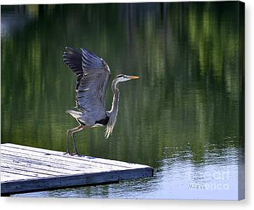 Canvas Print featuring the photograph Preparing For Take Off by Nava Thompson