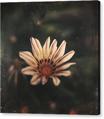 Dreamy Canvas Print - Presence by Taylan Apukovska