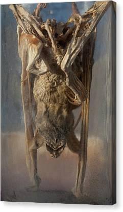 Preserved Panama Bat In Museum Jar Canvas Print by Paul D Stewart