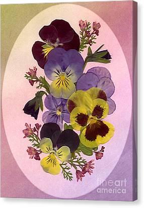 Pressed Pansies Canvas Print