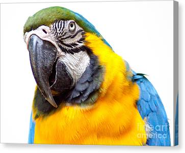 Tropical Bird Postcards Canvas Print - Pretty Bird by Roselynne Broussard