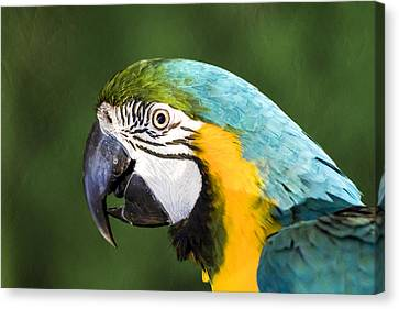Blue And Gold Macaw Canvas Print - Pretty Boy by Caitlyn  Grasso