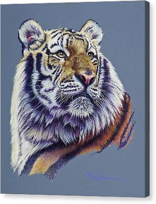 Pretty Boy Siberian Tiger Canvas Print