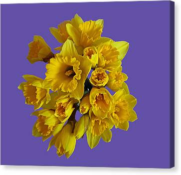 Pretty Daffodils Canvas Print