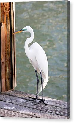 Pretty Great Egret Canvas Print