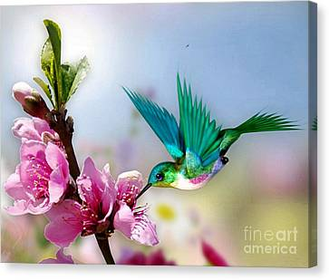 Pretty Hummingbird Canvas Print by Morag Bates