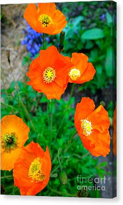 Pretty In Orange Canvas Print