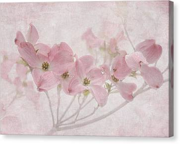 Pretty In Pink Canvas Print by Angie Vogel