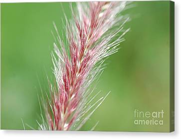 Canvas Print featuring the photograph Pretty In Pink by Bianca Nadeau