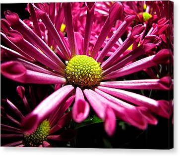 Canvas Print featuring the photograph Pretty In Pink by Greg Simmons