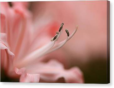 Pretty In Pink Canvas Print by Jacqui Collett