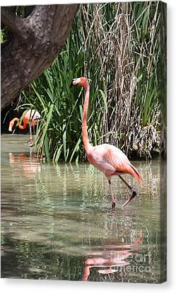 Canvas Print featuring the photograph Pretty In Pink by John Telfer