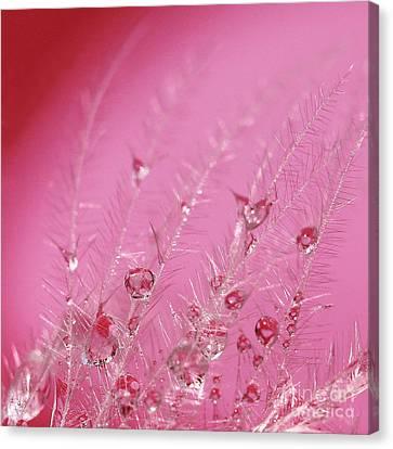 Pretty In Pink Canvas Print by Karin Ubeleis-Jones