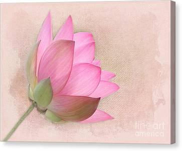 Pretty In Pink Lotus Blossom Canvas Print