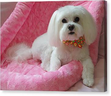 Pretty In Pink Canvas Print by Mary Beth Landis