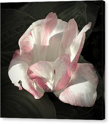 Canvas Print featuring the photograph Pretty In Pink by Photographic Arts And Design Studio