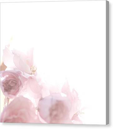 Pretty In Pink - The Dancer Canvas Print