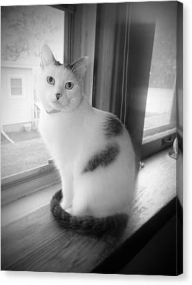 Pretty Kitty Canvas Print