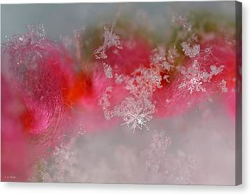 Canvas Print featuring the photograph Pretty Little Snowflakes by Lauren Radke