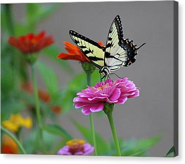 Canvas Print featuring the photograph Pretty On Pink by Lorna Rogers Photography
