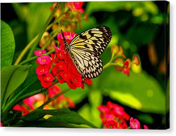 Pretty On Pink Canvas Print