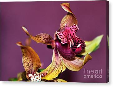 Golden Pink Orchid Canvas Print - Pretty Orchid On Pink by Kaye Menner