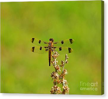 Pretty Painted Canvas Print by Al Powell Photography USA