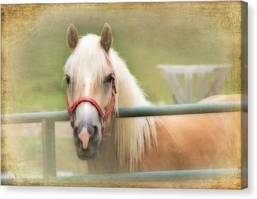 Pretty Palomino Horse Photography Canvas Print
