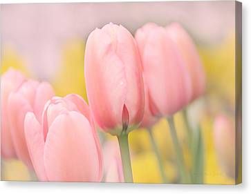 Pretty Pastel Pink Tulip Flowers Canvas Print by Jennie Marie Schell