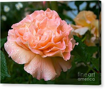 Pretty Peach Peony Flower Canvas Print