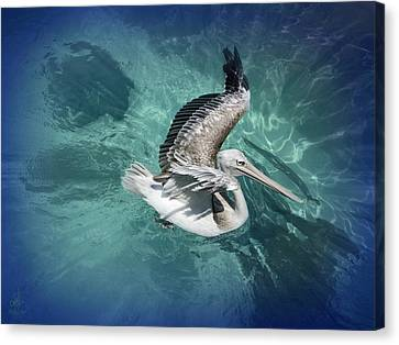 Canvas Print featuring the photograph Pretty Pelican by Pennie  McCracken
