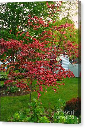 Canvas Print featuring the photograph Pretty Pink Beech Tree by Becky Lupe