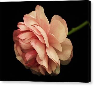 Pretty Pink Flower Canvas Print by Carol Welsh