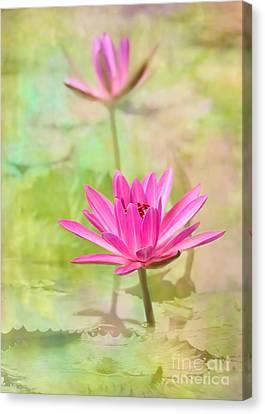 Florida Flowers Canvas Print - Pretty Pink Ladies by Sabrina L Ryan