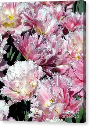 Pretty Pink Petal Canvas Print