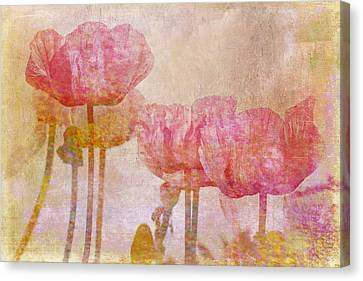 Pretty Poppy Garden Canvas Print by Peggy Collins
